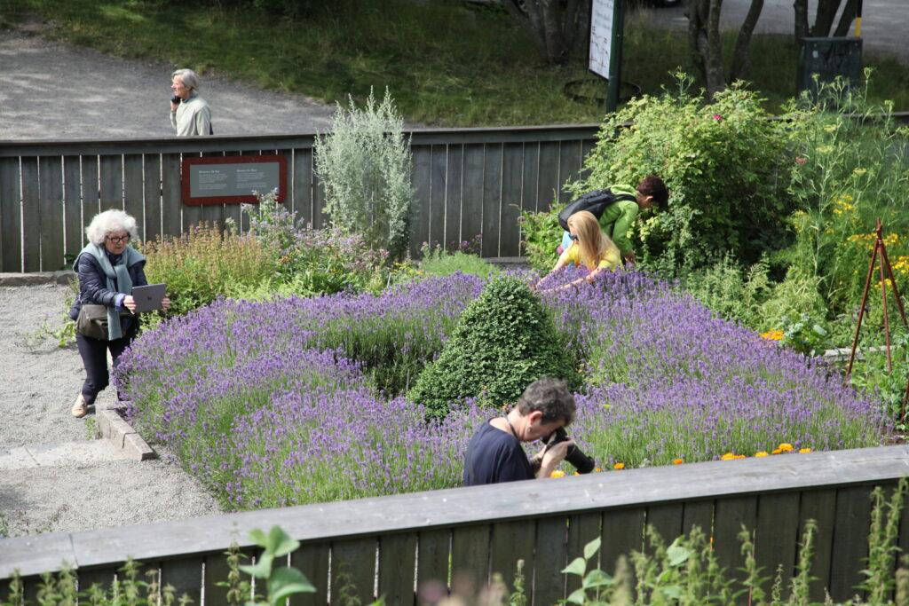 Vasaträdgården